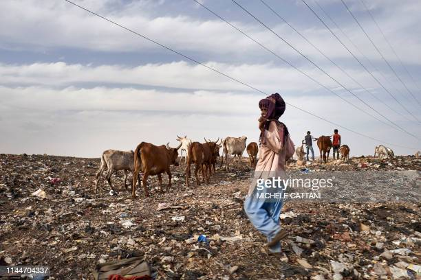 A Fulani herder leads his cattle to the landfill next to the Internally Displaced People's camp in Faladie where nearly 800 IDPs have found refuge...