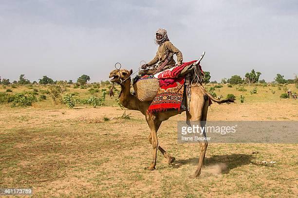CONTENT] Fulani man riding a camel in Borno State Nigeria