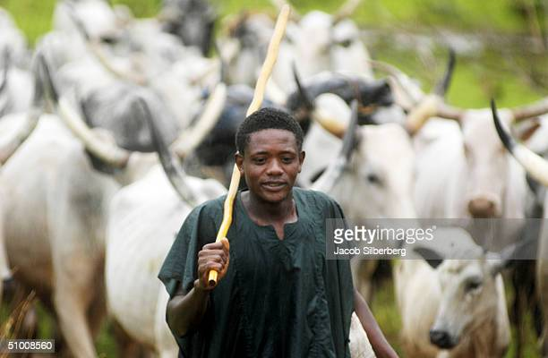 Fulani Muslim herder tends his cattle near Shendam in central Nigeria May 27 2004 Farmers with crops and those with cattle are clashing across Africa...