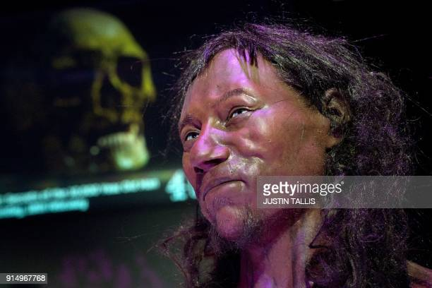 A full face reconstruction model made from the skull of a 10000 year old man known as 'Cheddar Man' Britain's oldest complete skeleton is pictured...