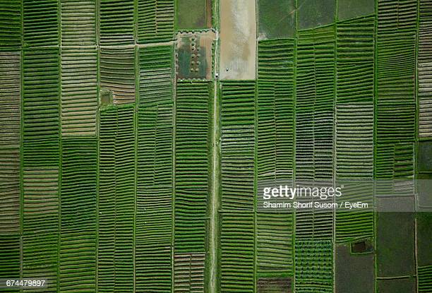 Full Frame Aerial View Of Cultivated Field