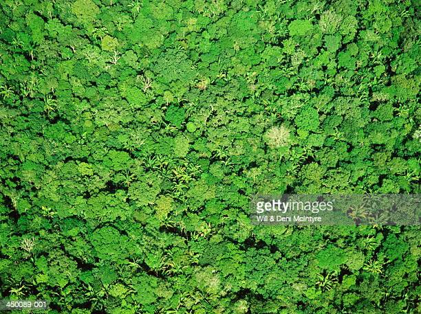 Full frame aerial view over forest canopy of the Amazon Jungle