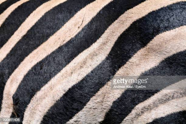 Full Frame Close Up Shot Of Zebra