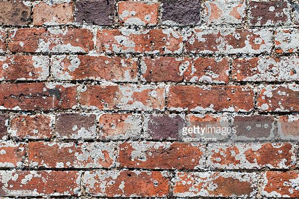 full frame decaying brick wall - andrew dernie photos et images de collection