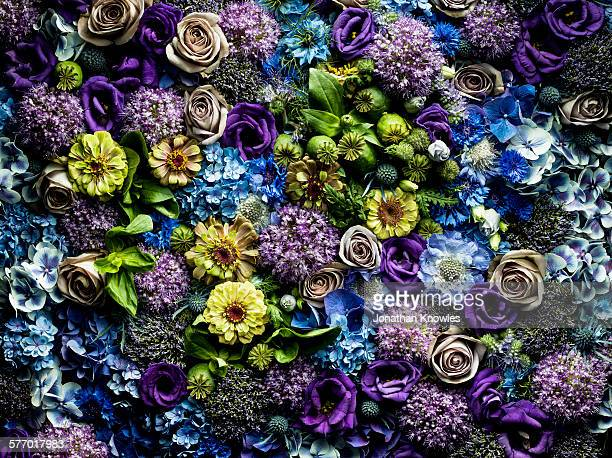 full frame flowers arrangement - bright beautiful flowers stock pictures, royalty-free photos & images