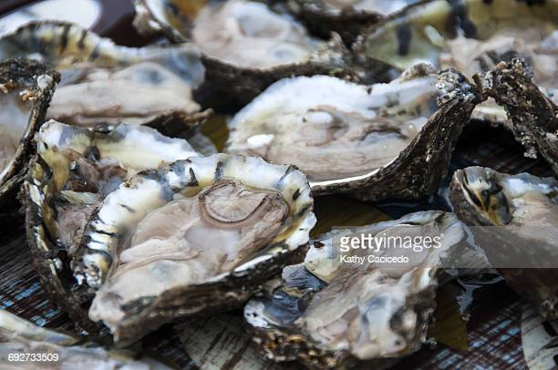 Full frame image of fresh oysters