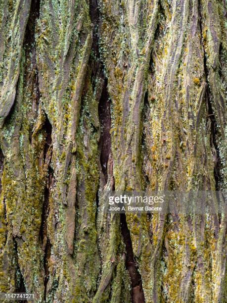 full frame multi colored mosses and lichens in the tree trunk of a wet forest. - tronco de árvore imagens e fotografias de stock