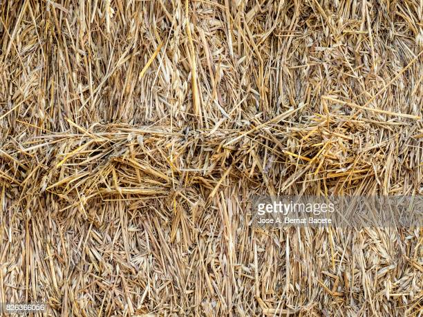 Full frame of a dry straw bale in the field, Spain