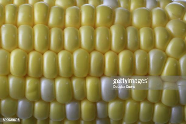 Full frame of a ear of Corn on the cob (zea mays)