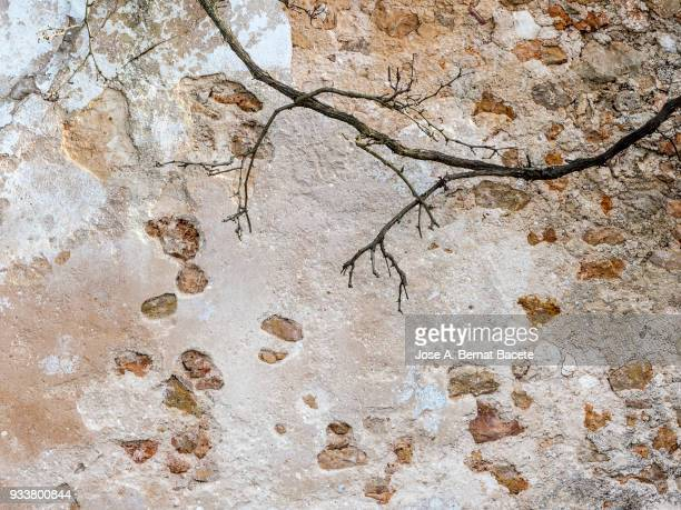 Full frame of a facade of a stone wall with bricks ancient and a branch of tree.  High resolution photography.