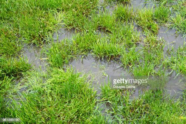 full frame of a flooded lawn area - heavy rain stock photos and pictures