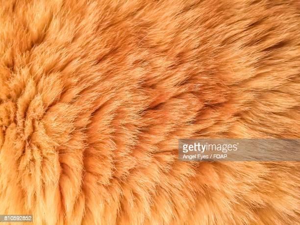 Full frame of animal hair
