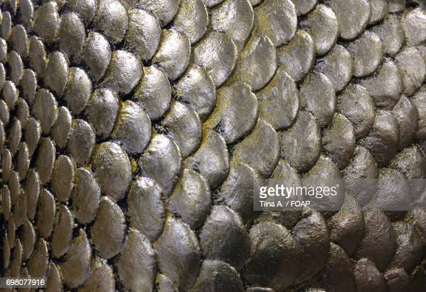 full frame of animal scale - fish scale pattern ストックフォトと画像