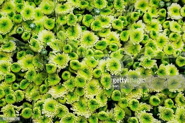 Full Frame of Color Full Green Flowers