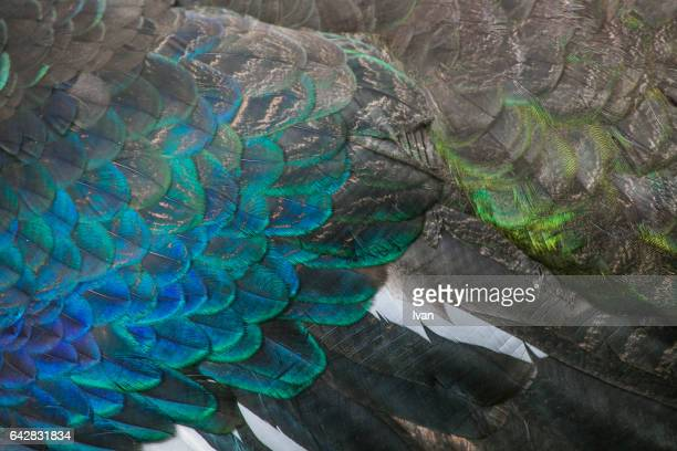 Full Frame of Colorful Bird Feather