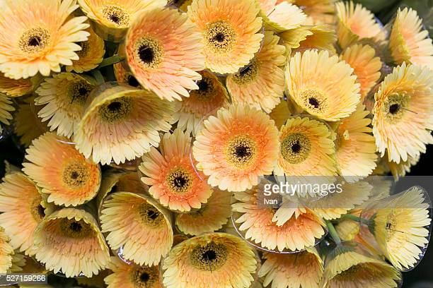Full Frame of Colorful Yellow and Orange Full Flowers