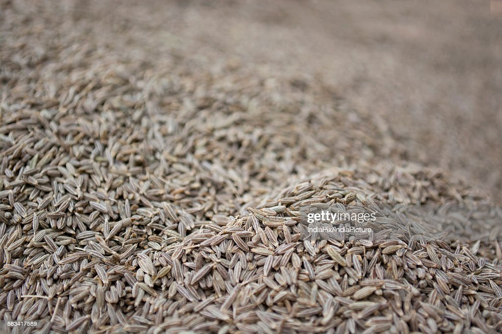 Full frame of Cumin seeds : Stock Photo