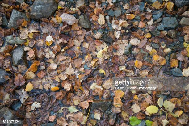 full frame of dead leaves and stones covered with water during autumn - leon boden stock-fotos und bilder