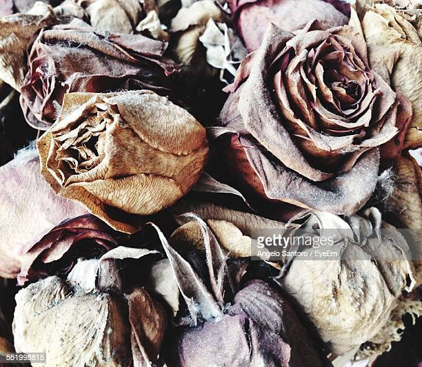Full Frame Of Dry Roses