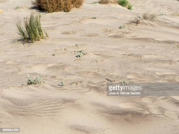 Full frame of dune of sand and vegetation. Cabo de Gata - Nijar Natural Park, Cala Mosul, Biosphere Reserve, Almeria,  Andalusia, Spain.