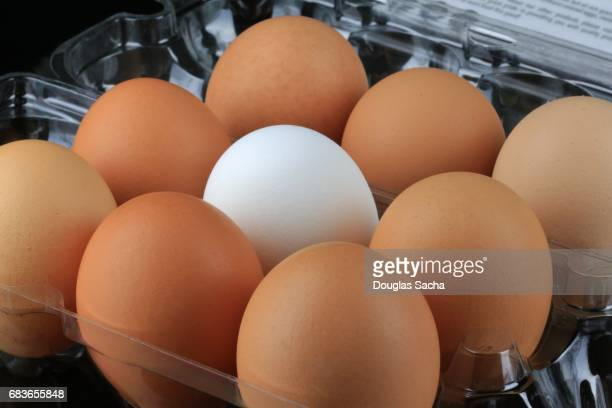 full frame of eggs on a plate (gallus gallus domesticus) - ugly duckling stock photos and pictures
