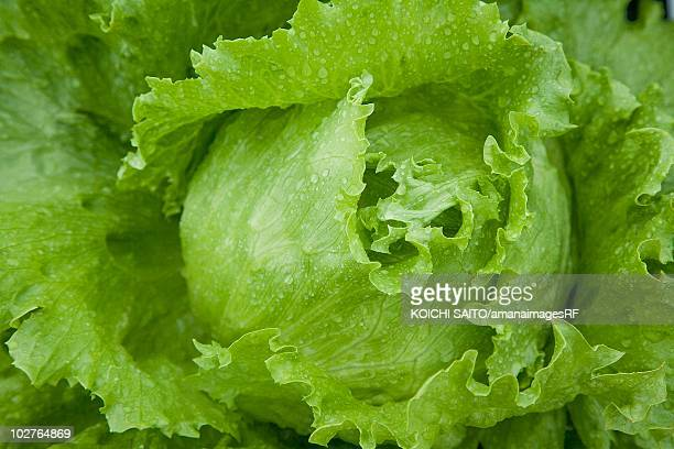 Full frame of fresh green lettuce