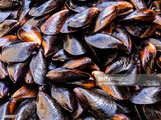 full frame of fresh mussel - igor golovniov stock pictures, royalty-free photos & images