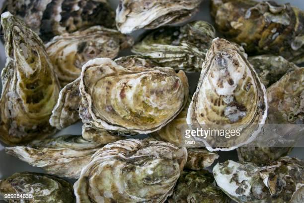 full frame of fresh oyster - pescado y mariscos fotografías e imágenes de stock