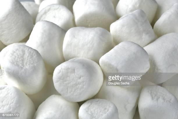 Full frame of Mini Marshmallows (Althaea officinalis)