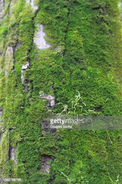 Full frame of moss covering a tree trunk