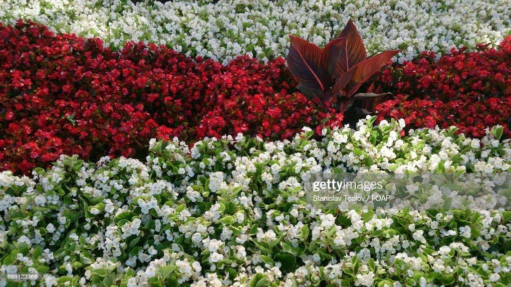 Full frame of multi colored flowers : Stock Photo