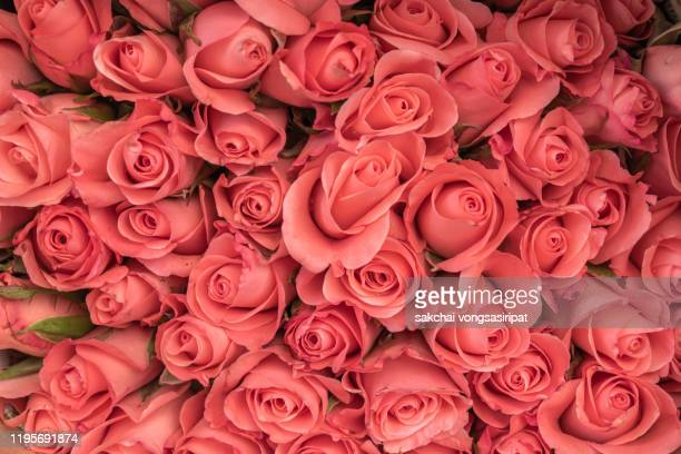 full frame of orange roses bouquet - rose colored stock pictures, royalty-free photos & images
