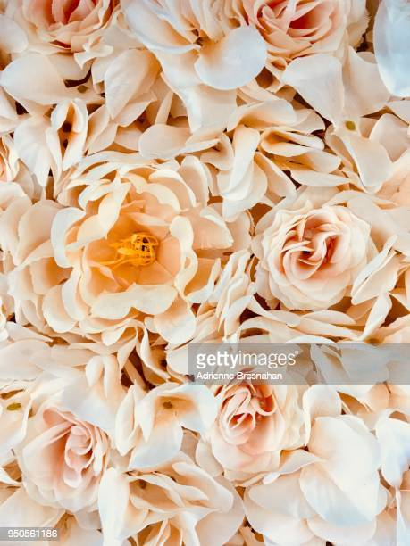 full frame of peach-colored flowers - peach flower stockfoto's en -beelden