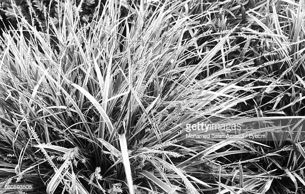 full frame of plant - salah stock photos and pictures