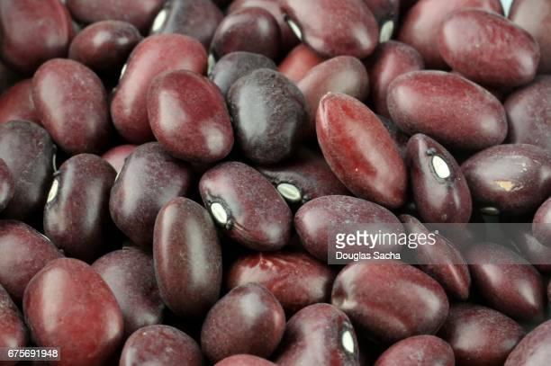 Full frame of Red Chili Beans (Phaseolus vulgaris)
