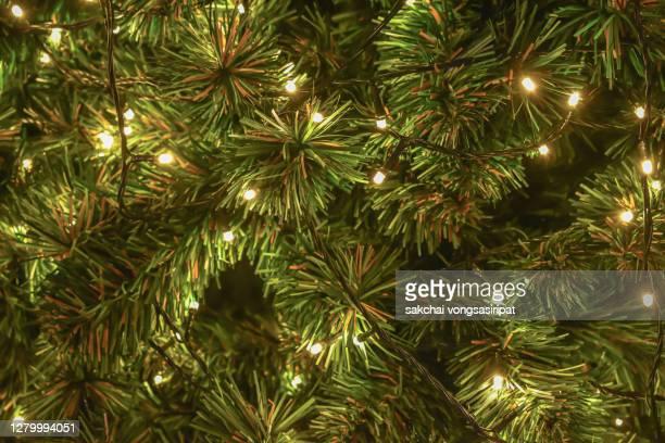 full frame of shot of illuminated pine tree decorations on christmas tree - 針状葉 ストックフォトと画像