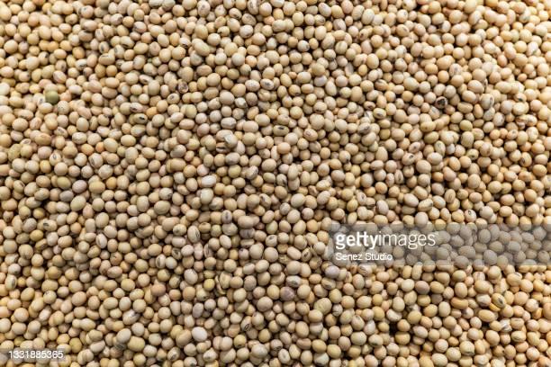 full frame of soybean - prato de soja - fotografias e filmes do acervo