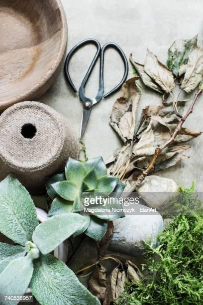 Full frame of succulent plants, scissors and plant pots