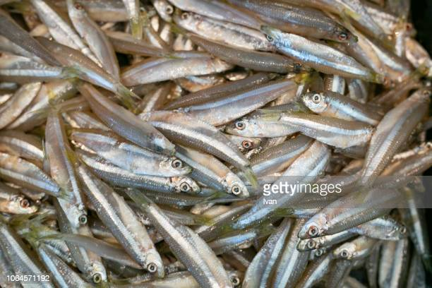 full frame of texture, seafood, food, group of small fishes on sell - fish scale pattern ストックフォトと画像