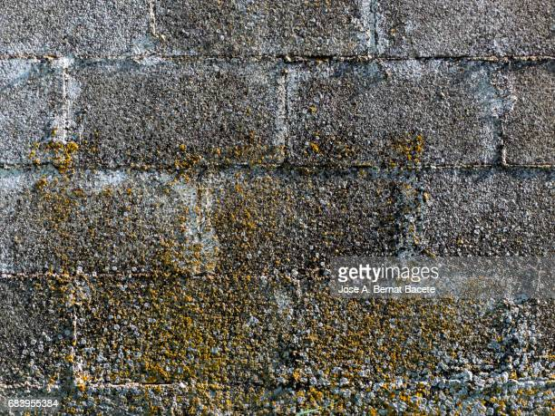 Full Frame of the ancient wall of bricks with dampness and dirty in the field, with mold and yellow moss due to humidity