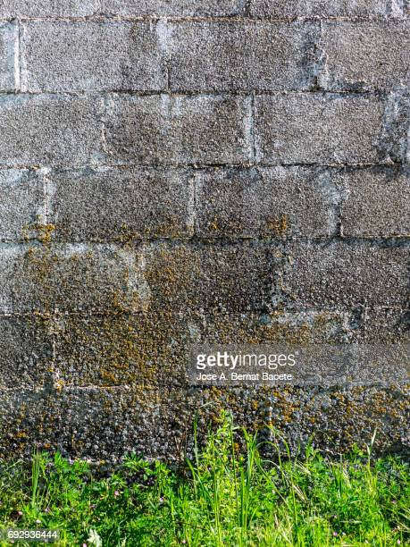 Full Frame of the ancient wall of bricks with dampness and dirty in the field, with grass in the soil