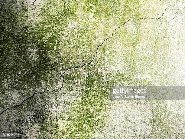 Full frame of the textures of an ancient wall with a crack and remains of green mildew