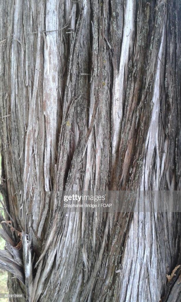 Full frame of tree trunk : Stock Photo
