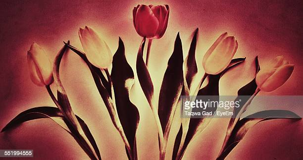 Full Frame Of Tulip Flowers Painting On Wall