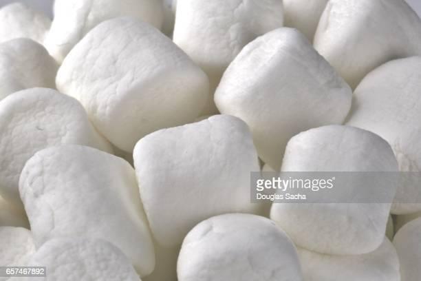 Full frame of white Marshmallows (Althaea officinalis)