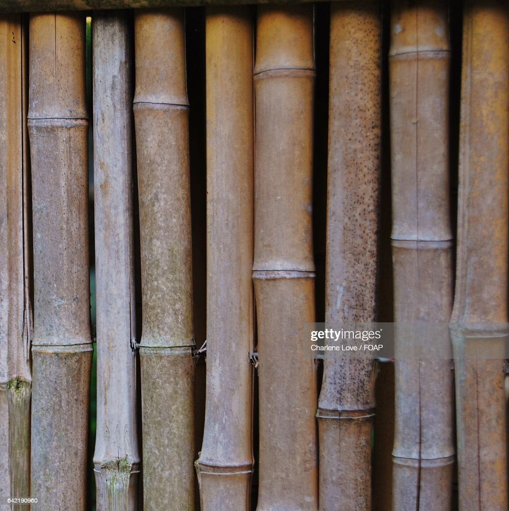 Full Frame Shot Bamboo Stack Stock Photo | Getty Images