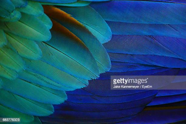 Full Frame Shot Macaw Feathers