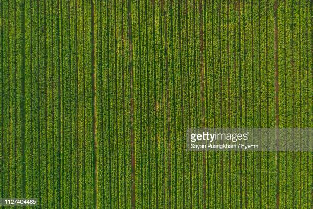 full frame shot of agricultural field - campo foto e immagini stock