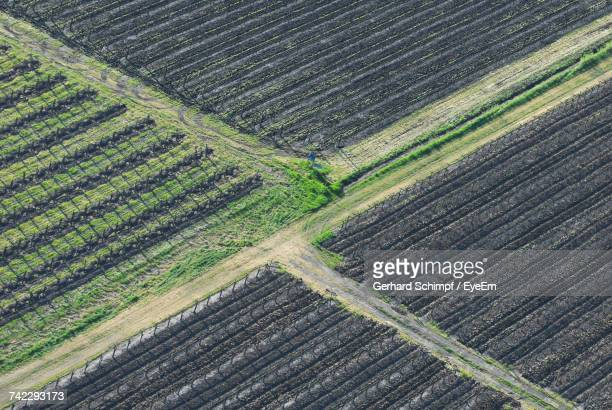 full frame shot of agricultural field - gerhard schimpf stock pictures, royalty-free photos & images