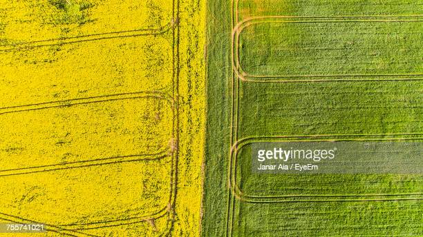 Full Frame Shot Of Agricultural Fields